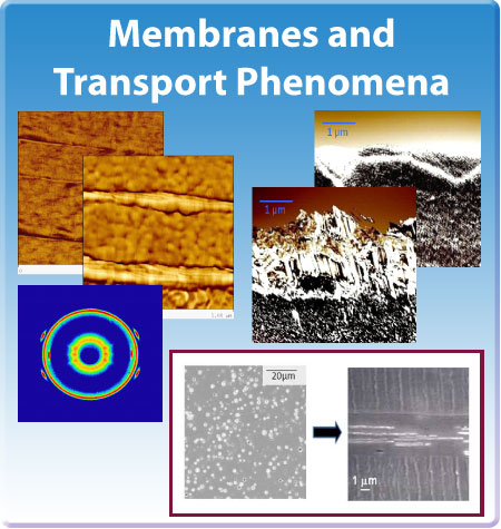 CLiPS Membranes and Transport Phenomena